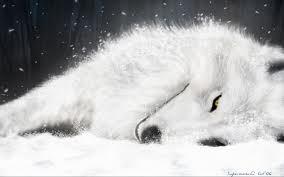 http://thewolfoftheforest.t.h.pic.centerblog.net/o/a28a9583.jpg